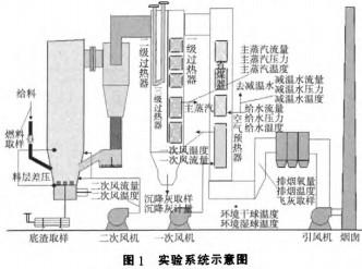 生物结构模式图